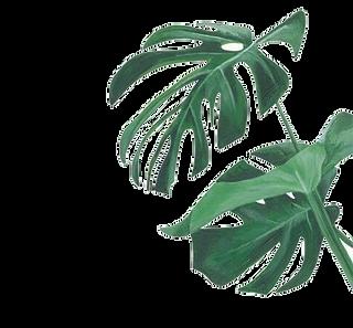 1569261749Watercolor-painting-Leaf-Botan