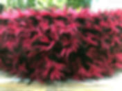 Hot Pink Punk Close Up.jpg