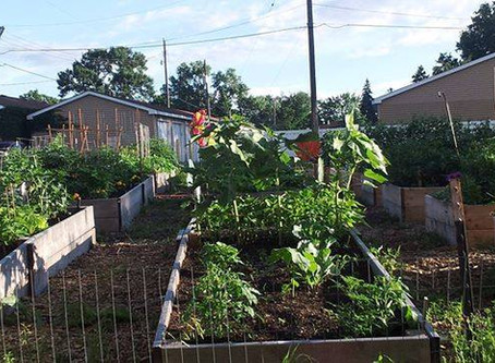 Windom Community Garden closes for season