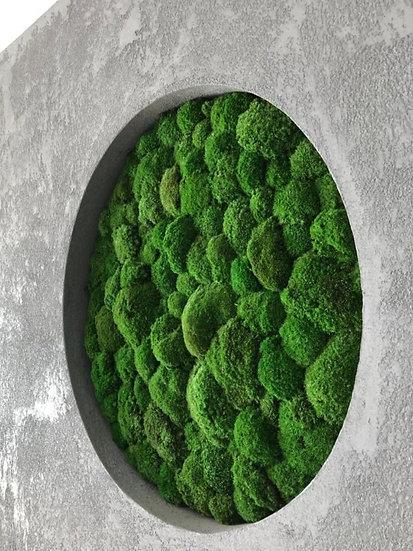 Okrągły panel z mchu poduszkowego - średnica 100cm
