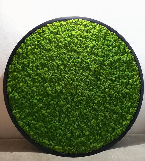 Okrągły panel z mchu Chrobotka - średnica 120cm