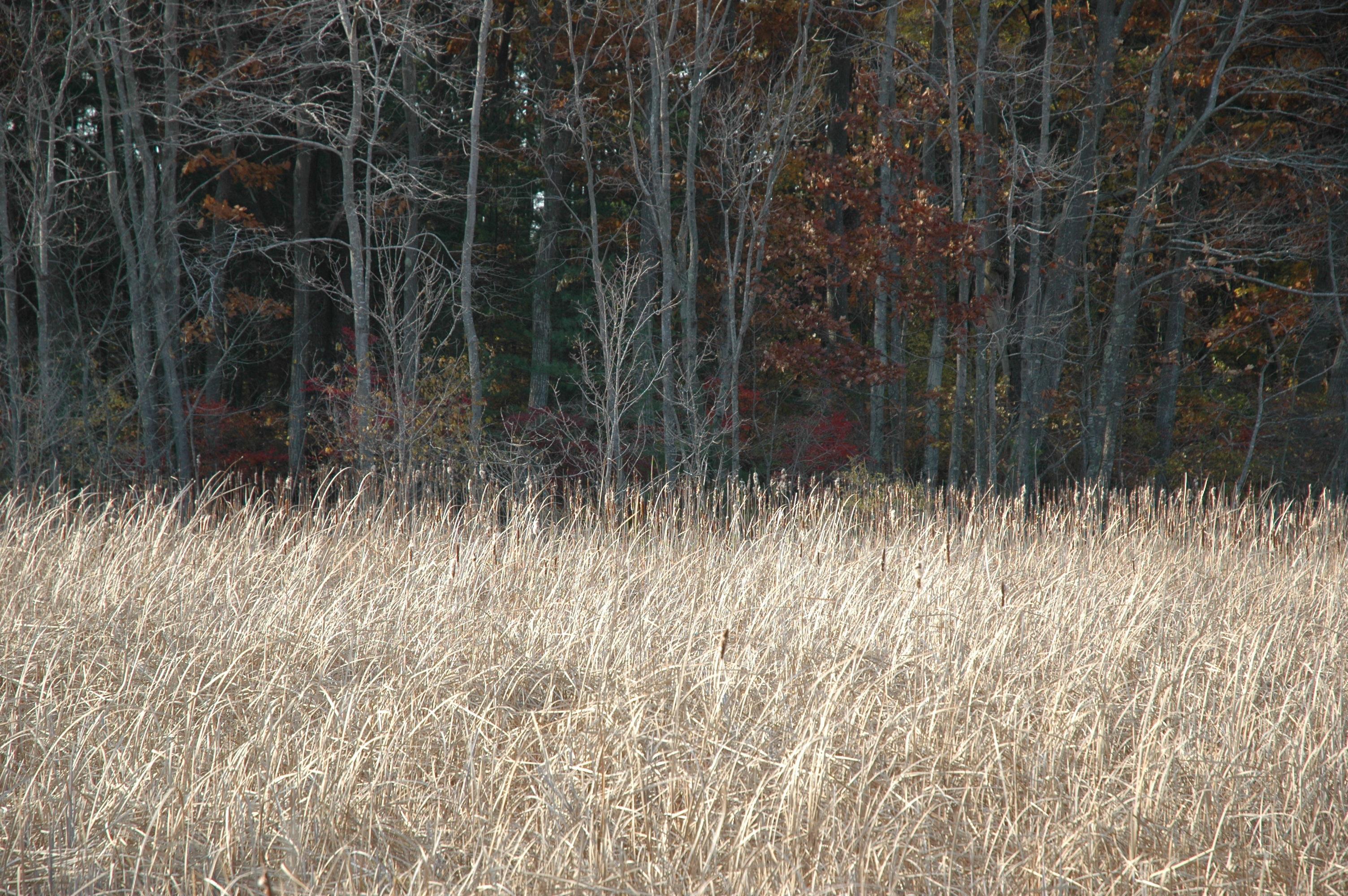 Nov_4_2008 179