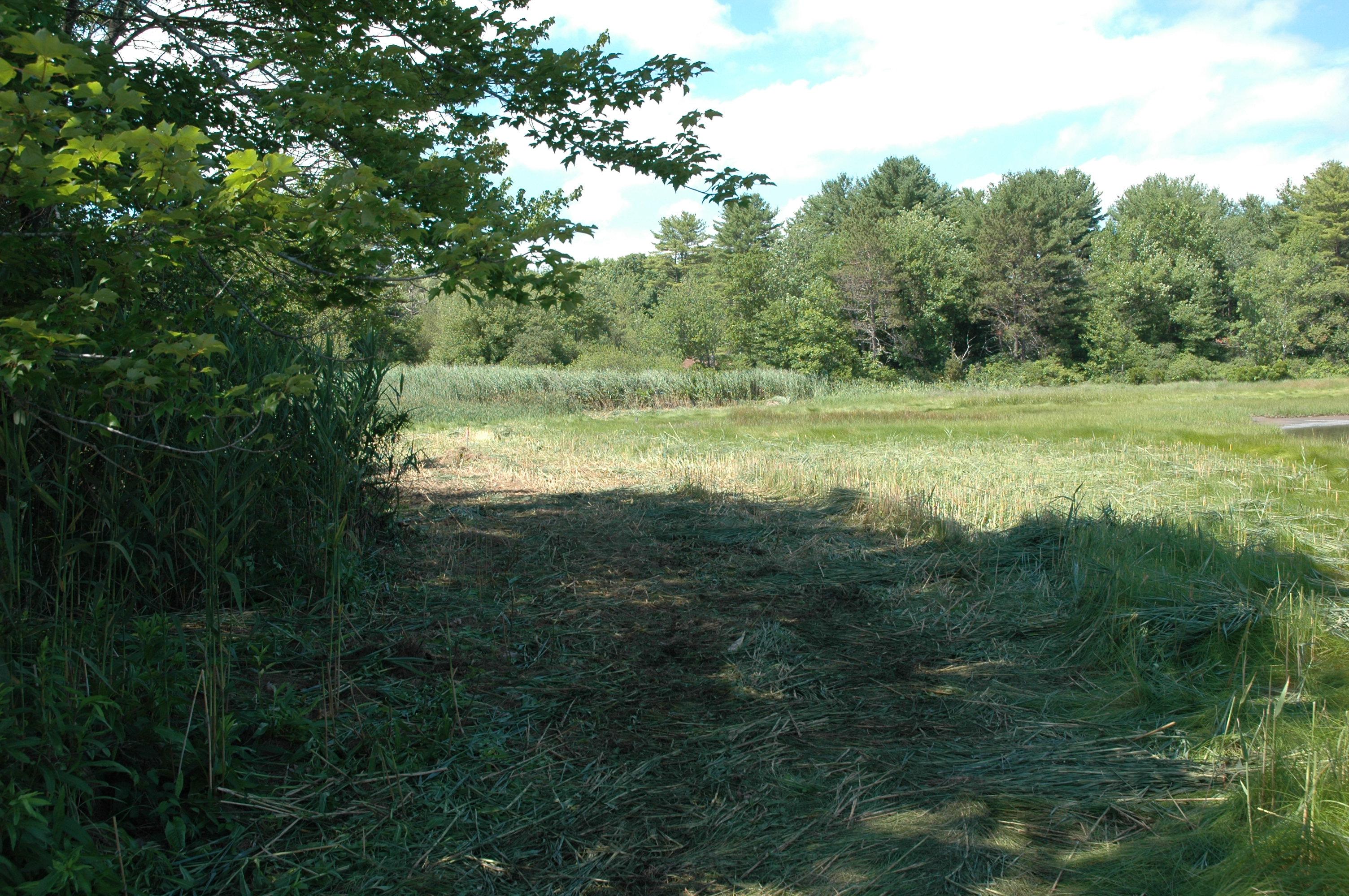 Parsons Creek