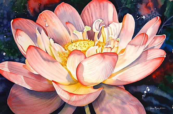 pink waterlily,small72dpi copy.jpeg