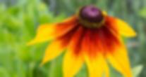 Screen Shot 2020-01-07 at 12.39.52 PM.pn