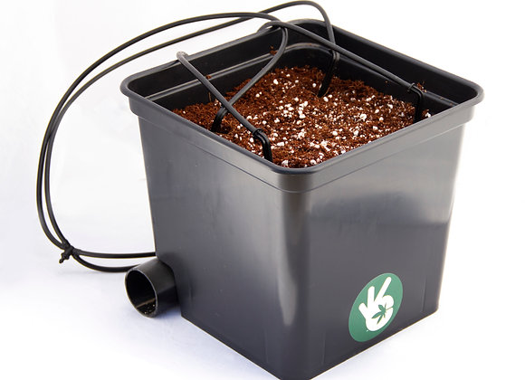 DIY Dutch bucket systems