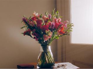 Bloom & Wild - Care Wildly 'Big Sis'