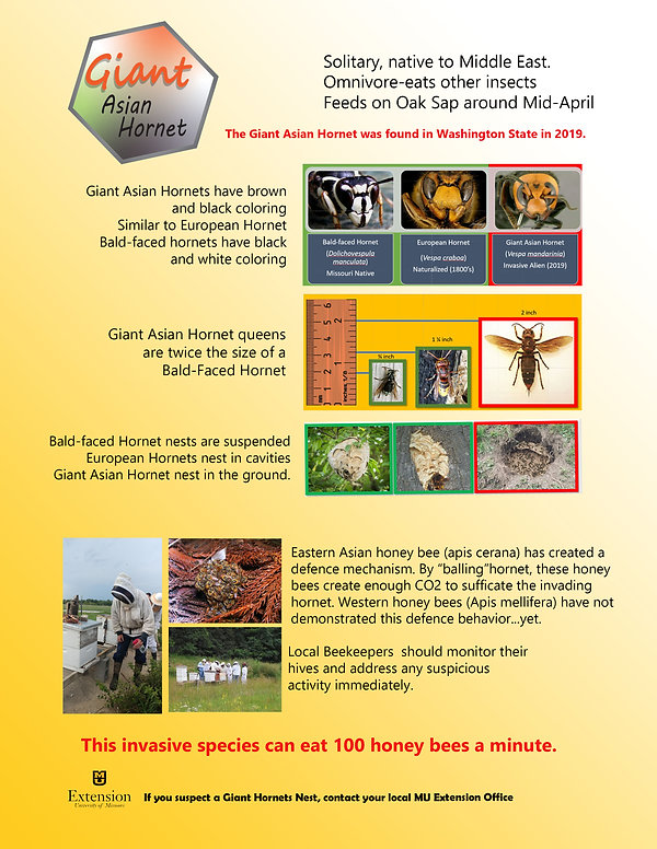 Comparing hornets - Copy.jpg