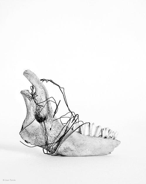 Natura morta X Copia fotográfica - 33 X 48 cm.