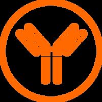 antibody5.png