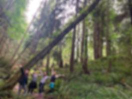 Soul Pod Trees.jpg