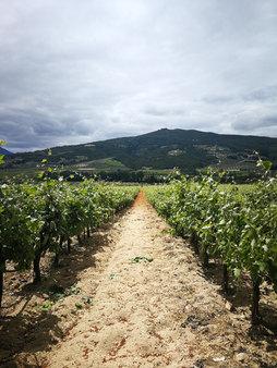 Gefyraki Vineyards