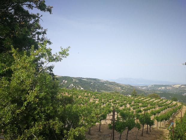 Koutsi Vineyards