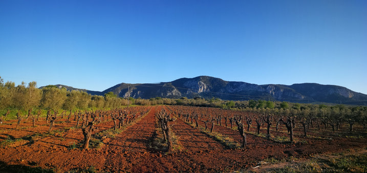 Vineyards in Corinthia