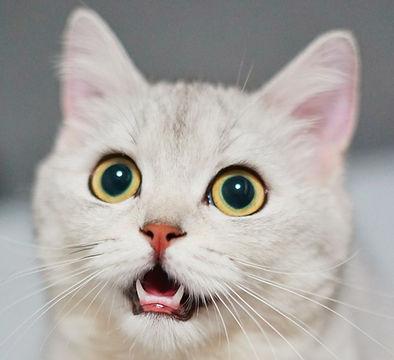 Seminar Stress bei Katzen