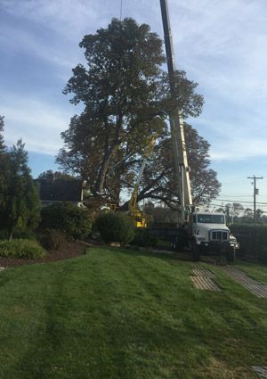tree-removal-services-1621