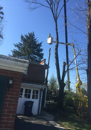 tree-removal-services-169