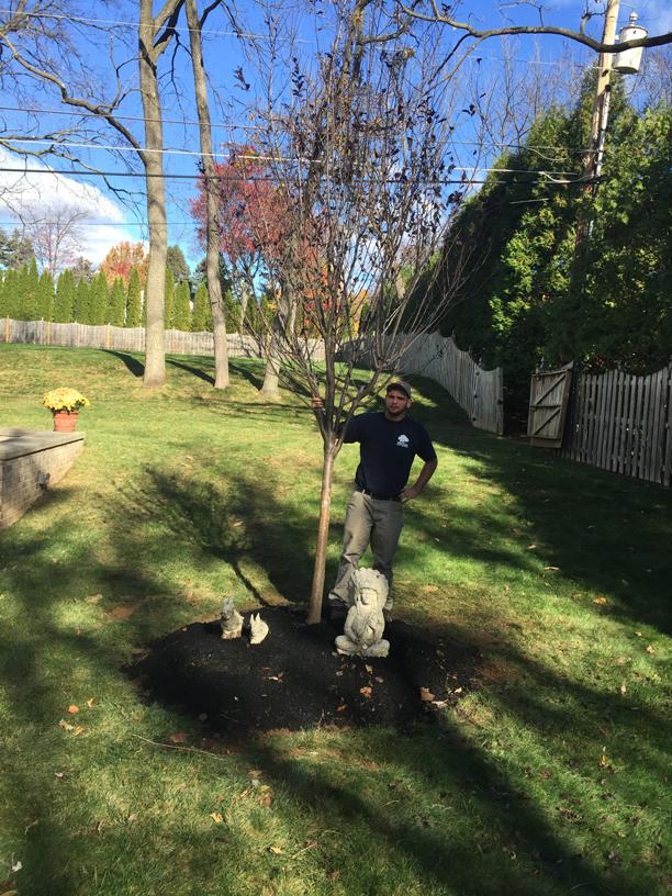 certified-arborist-planting-a-tree