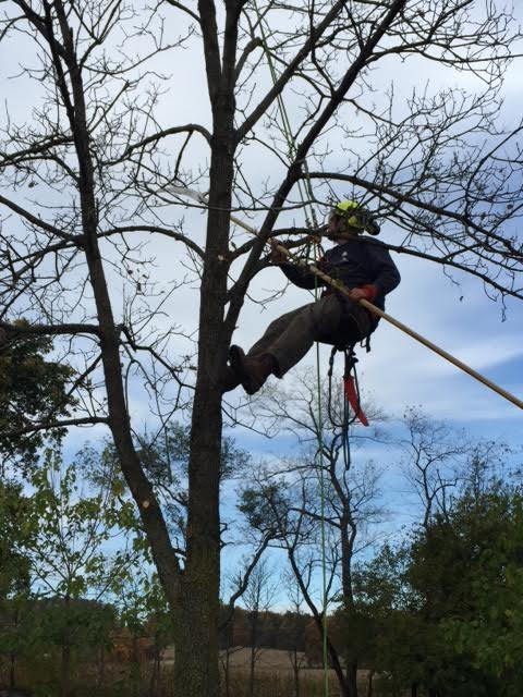tree pruning job in allentown pa