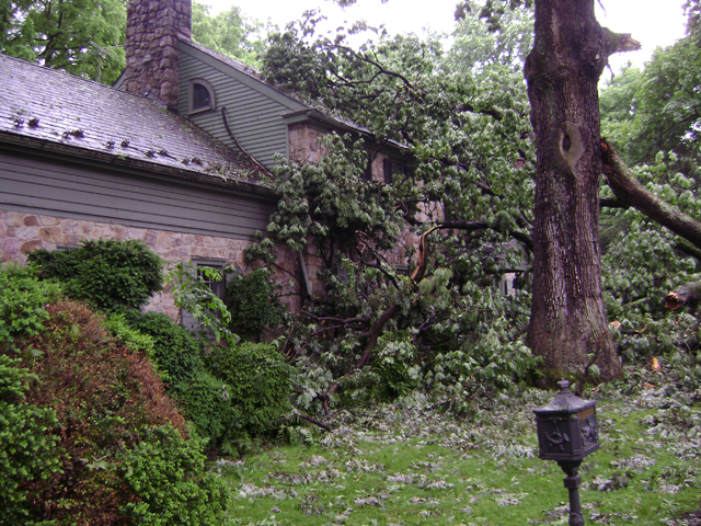 Falling tree in bad weather storm allentown pa 4