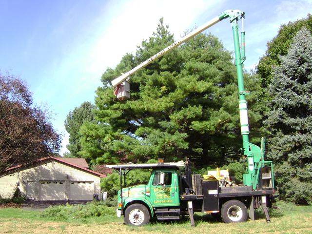 75 foot bucket truck pruning trees