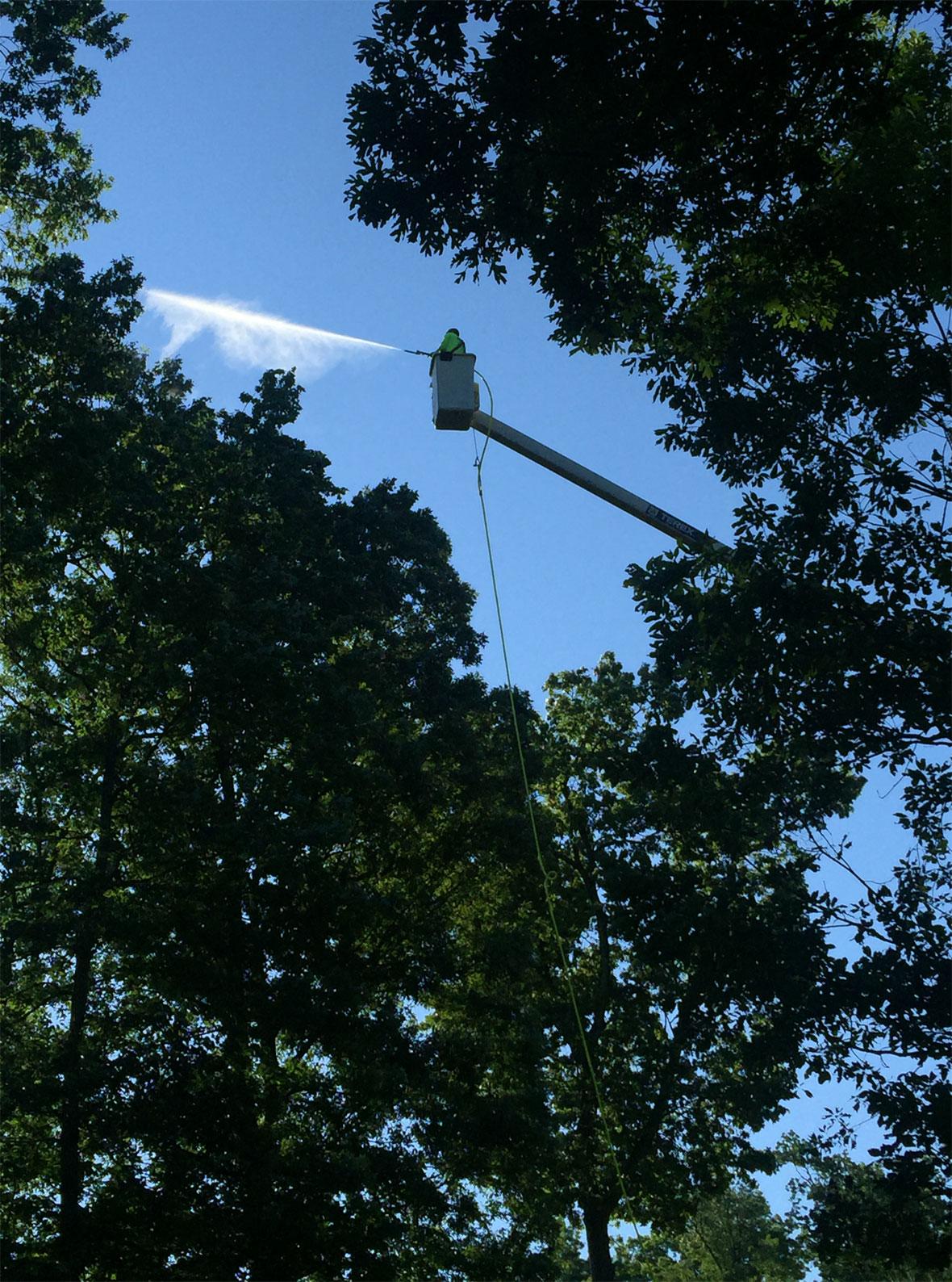 tree-shrub-pest-control-services-lehigh-valley-pa