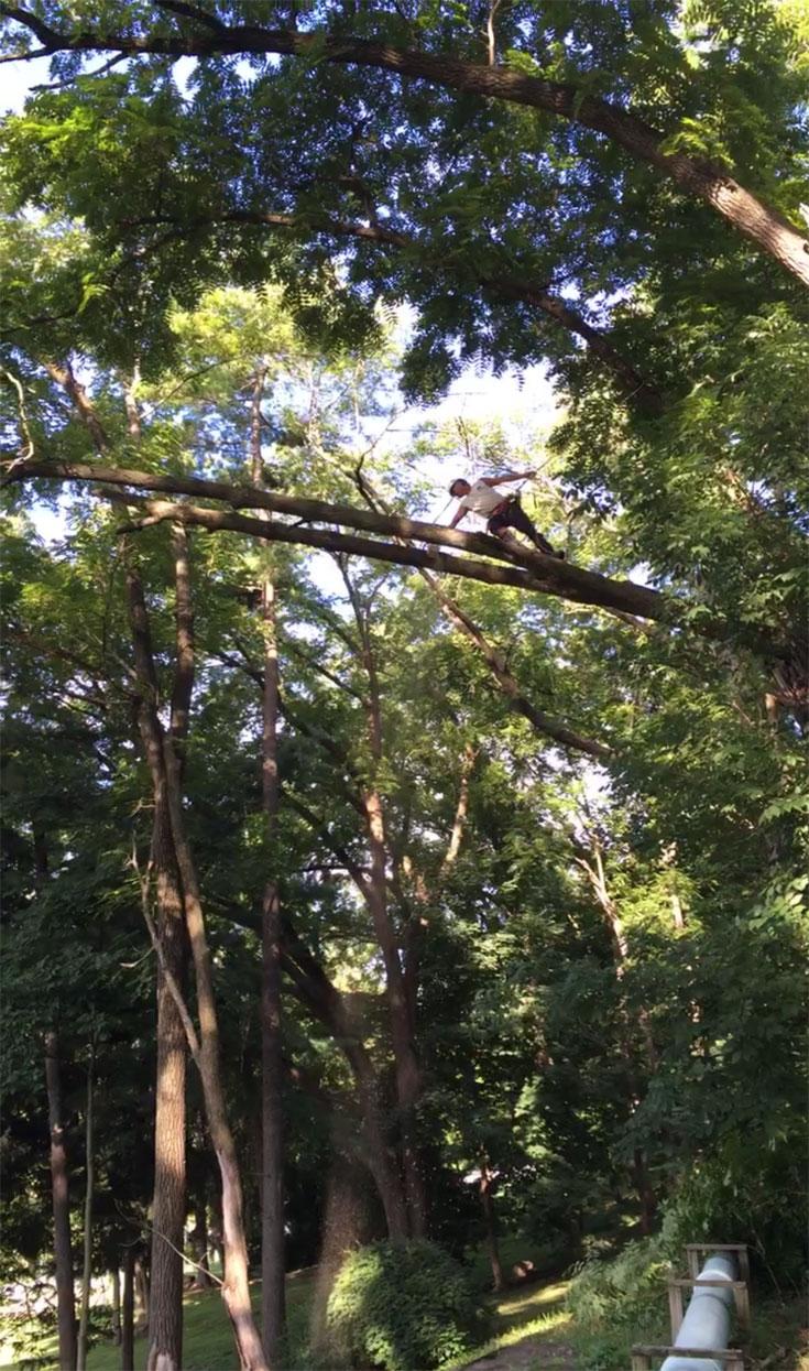 tree-removal-companies-bethlehem-pa