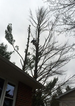 tree-removal-services-1625