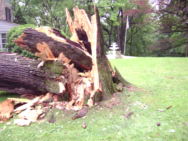 Falling tree in bad weather storm allentown pa
