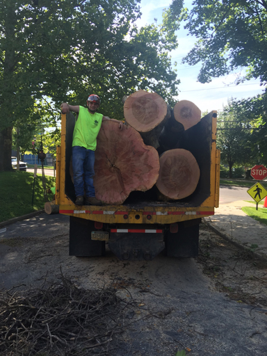 what-does-it-cost-to-remove-a-tree
