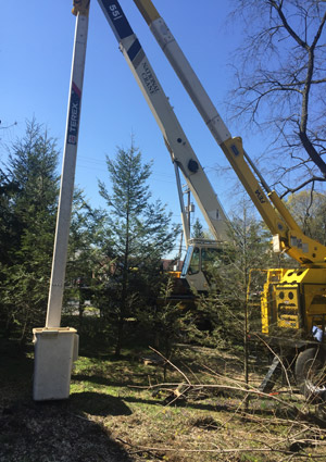 tree-removal-services-167