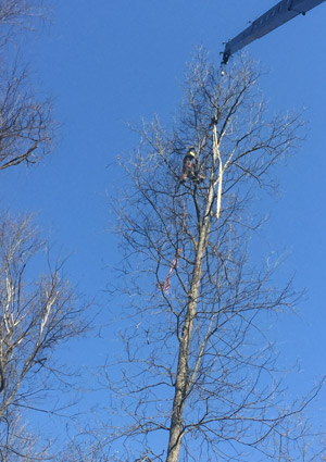 tree-removal-services1624