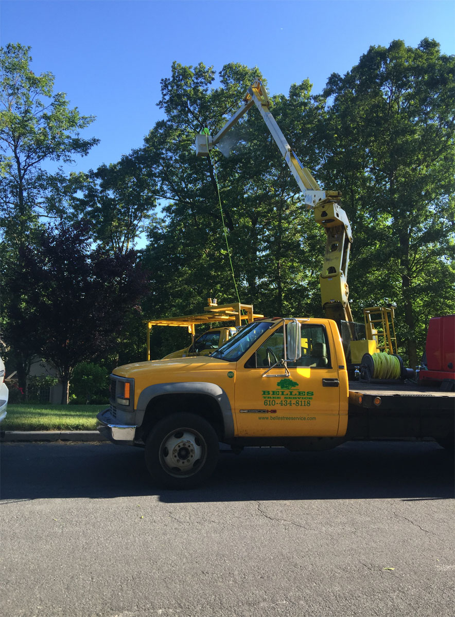 tree-spraying-services-lehigh-valley-pa