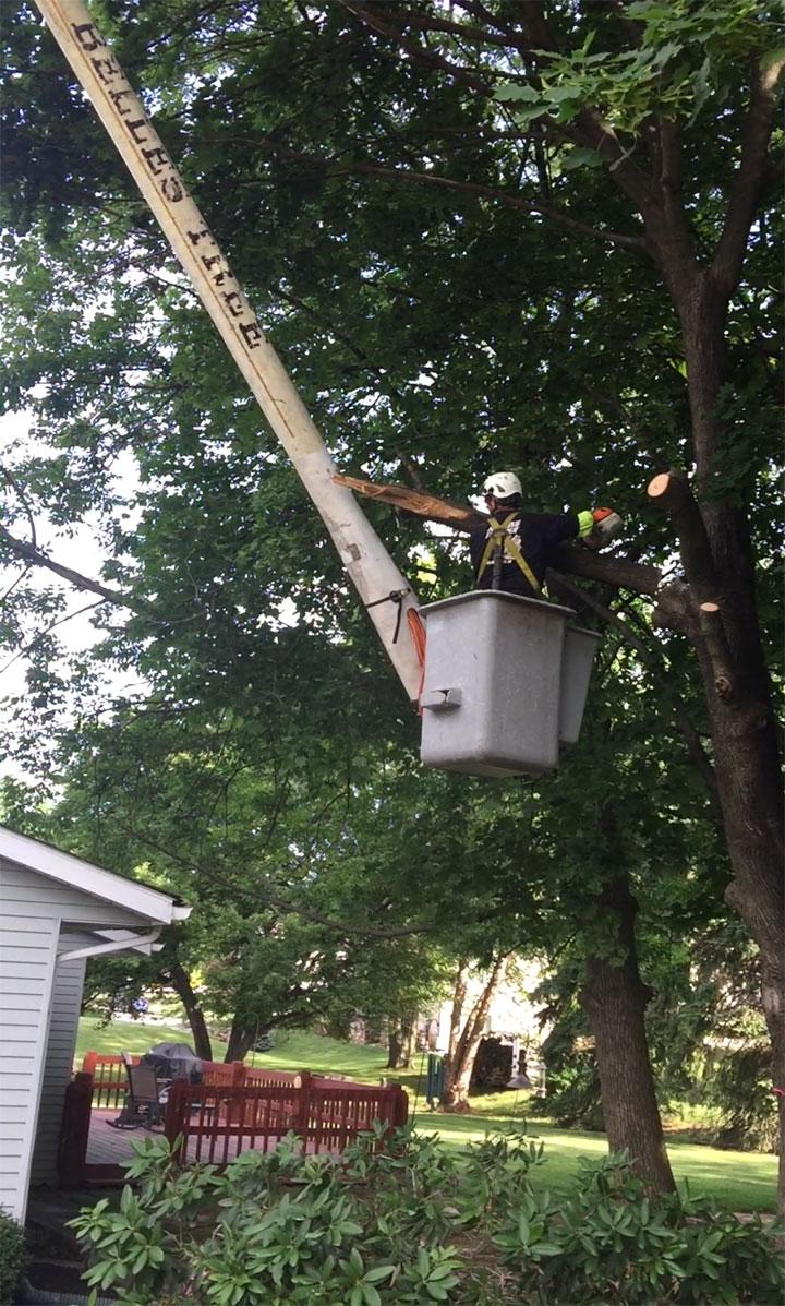 tree-removal-companies-easton-pa