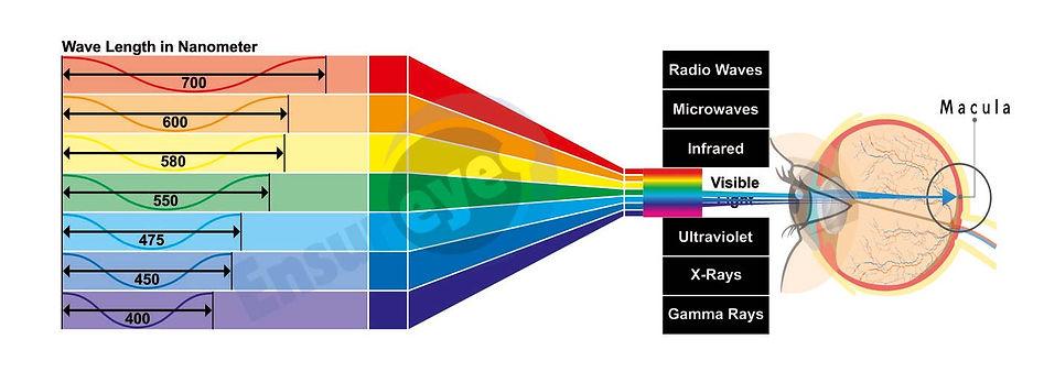 Blue-light-stricks-the-Macula-spectra-co