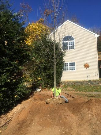 Tree Shrub Care