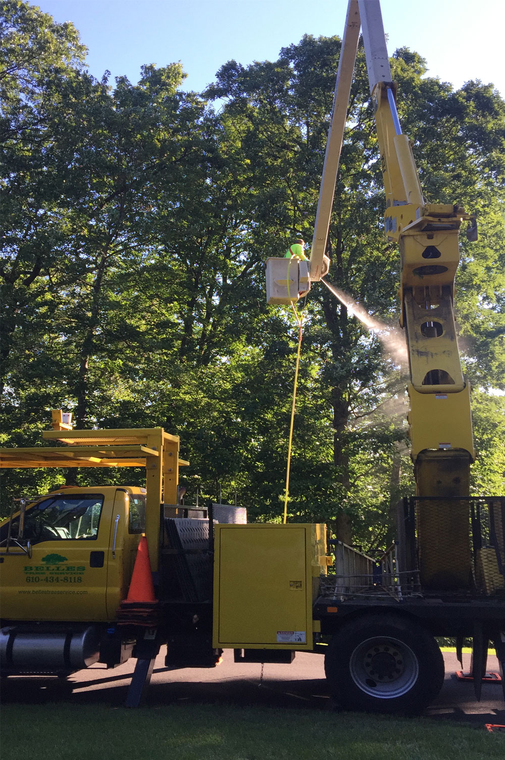 tree-spraying-pest-control-services-lehigh-valley-pa