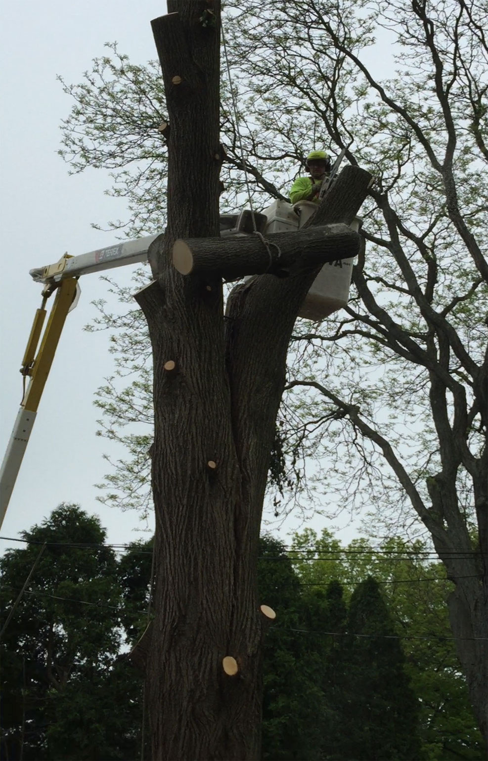 tree-removal-companies-allentown-pa