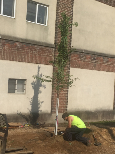 planting-trees-in-city-by-certified-arborist