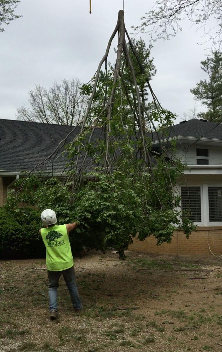 tree-removal-companies-bethlehem-pa3