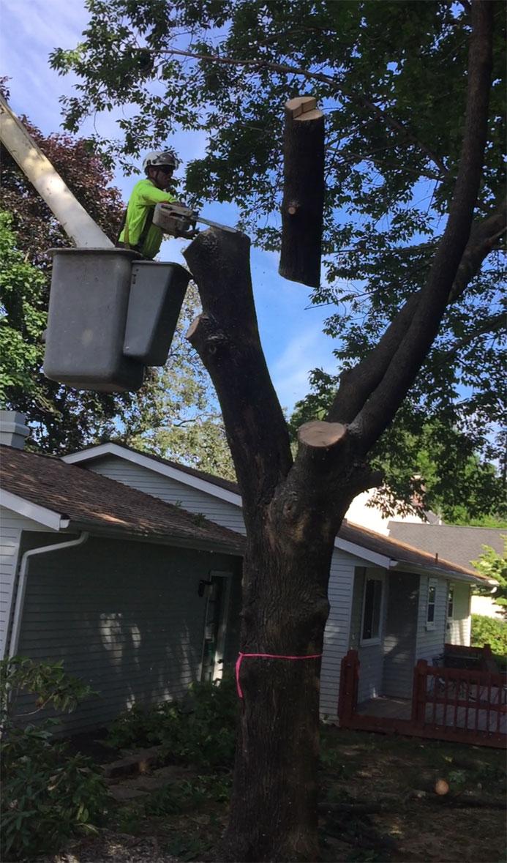 tree-removal-companies-easton-pa2