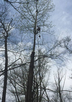 tree-removal-services-1622