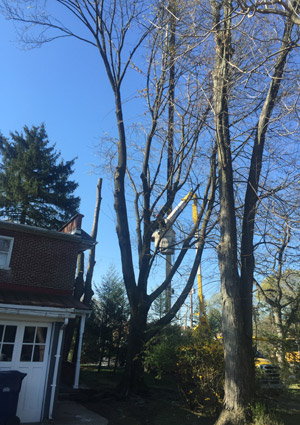 tree-removal-services-1604