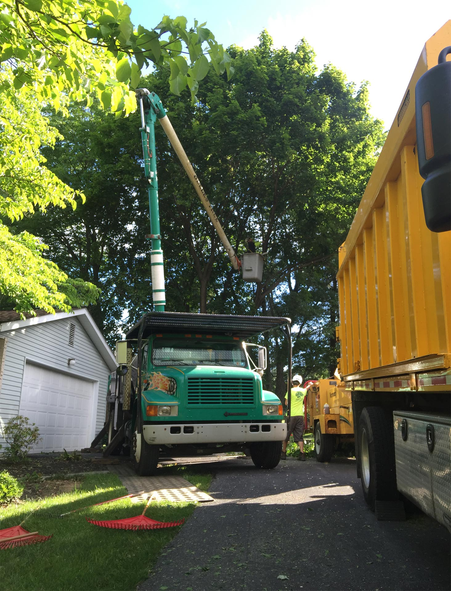 tree-removal-companies-easton-pa3