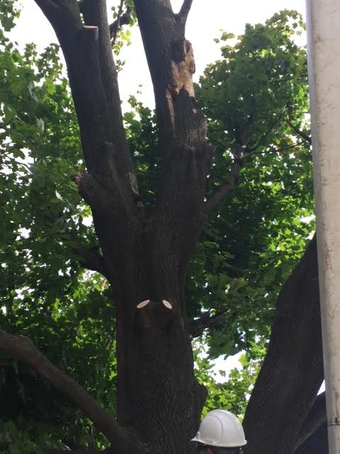 tree hazard pruning in bethlehem pa