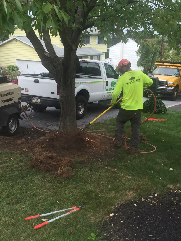 belles-tree-offers-root-collar-services-in-my-area-lehigh-valley