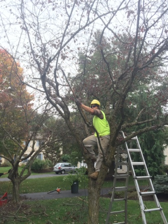 tree pruning services in bethlehem pa