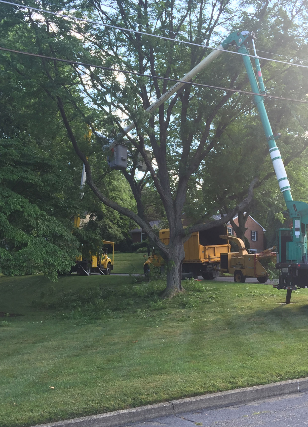 tree-pruning-contractors-in-easton-pa-n