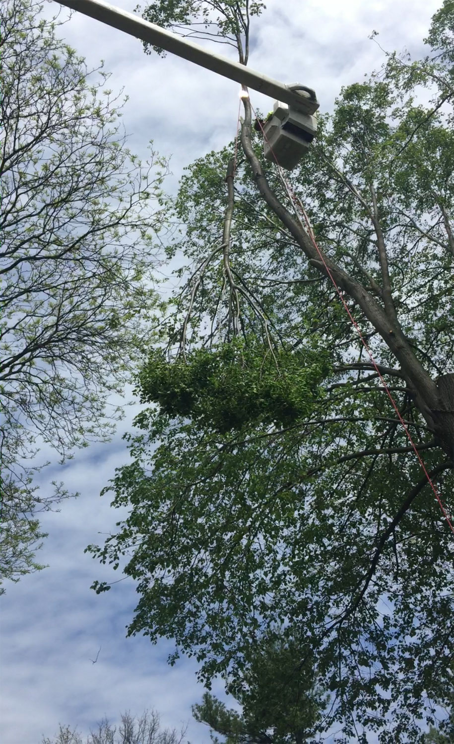 tree-removal-companies-allentown-pa2