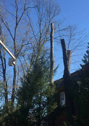 tree-removal-services-1602